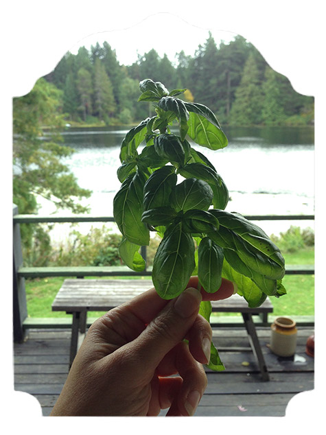 basil to preserve