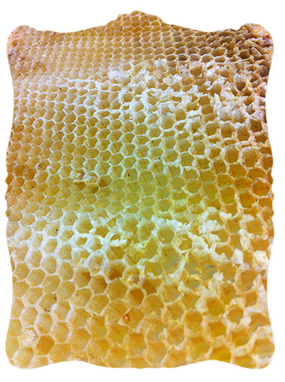 extracted honeycomb