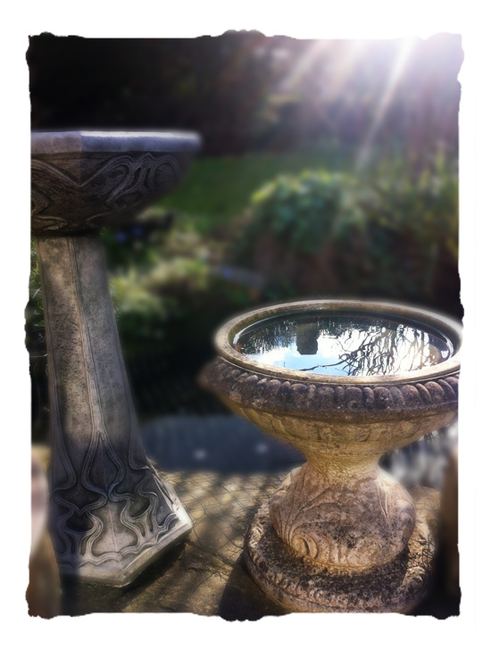 bird bath © elisa rathje 2012
