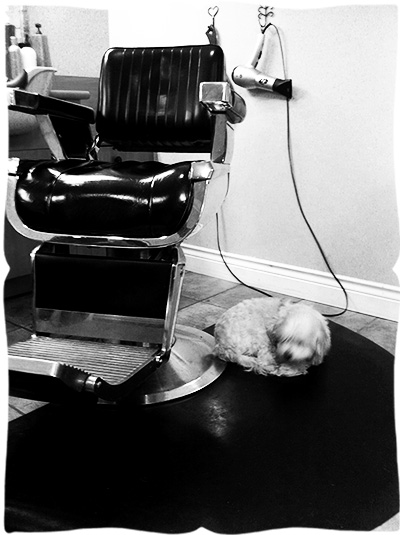 salon chair with sleeping dog