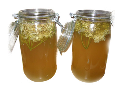 elderflower brew