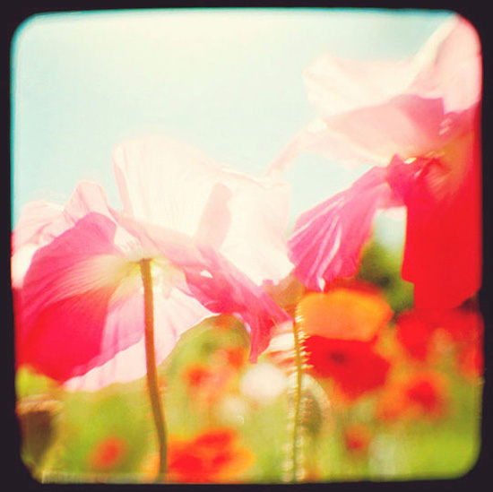 through the viewfinder © Janis Nicolay 2011