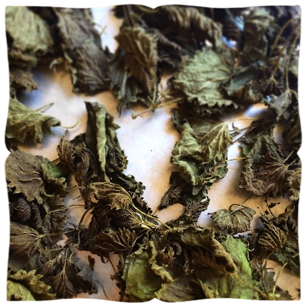 dried-nettles